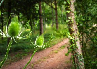 woodland-10-px